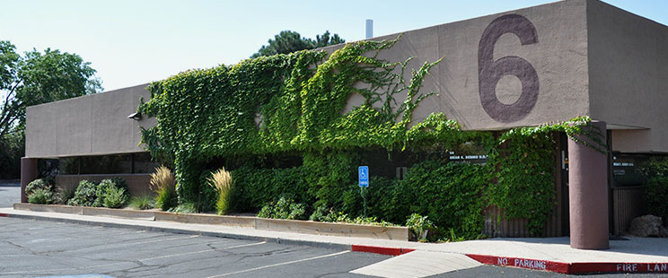 Outside view of brown office building with green ivy growing on the wall